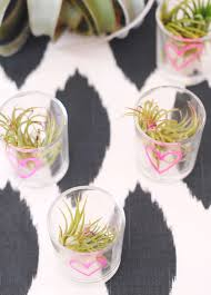 plant wedding favors air plant favors a subtle revelry