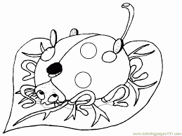 coloring pages bug coccinelles insects ladybugs free printable
