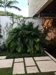 landscape design ideas cat palm and creeping fig accent the entry