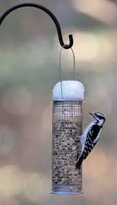 wild birds unlimited michigan u0027s top 20 winter backyard birds