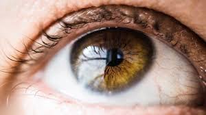 Gene Therapy For Blindness Spark U0027s Gene Therapy For Blindness Is Racing To A Historic Date