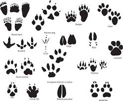 check these 10 paw print tattoo ideas you might like to have for