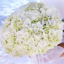 hydrangea wedding bouquet fresh white hydrangea bridal bouquet global
