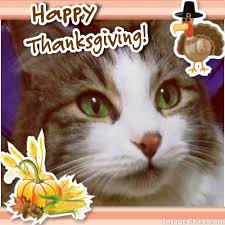 happy thanksgiving usa feline café