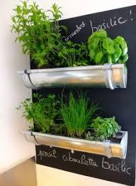 plante de cuisine jardin de plantes aromatiques gouttiere design restaurant