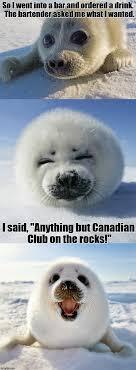 Baby Seal Meme - bad pun baby seal imgflip