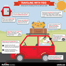 traveling with pets images On the go with fido car safety tips for traveling with pets jpg