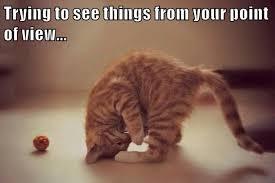 Cheezburger Meme Builder - i can has cheezburger laugh funny internet cats cat memes and