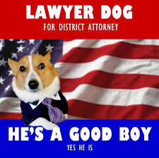 Law Dog Meme - lawyer dog for district attorney lawyer meme and humor humour