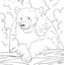 bears coloring pages wallpaper download cucumberpress