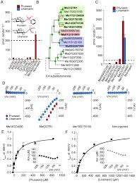 origin and evolution of transporter substrate specificity within