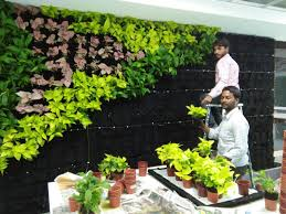 vertical gardens bangalore green walls indoor and outdoor