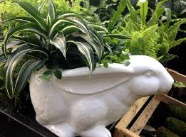 Indoor Tropical Plants For Sale - gardening indoor tropical plants for winter u2013 carycitizen