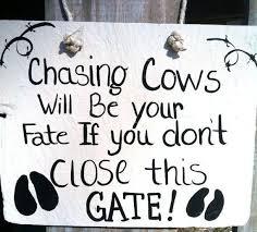 Cow Decor Best 25 Cow Decor Ideas On Pinterest Western Decor Cow Wall