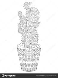 zentangle cactus vector illustration hand drawn outline desert