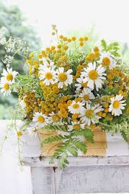 377 best flowers images on pinterest flowers plants and pretty