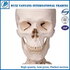 cheap plastic skeletons cheap plastic skeletons suppliers and