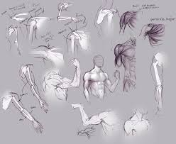 upper arm and shoulder anatomy by moni158 on deviantart