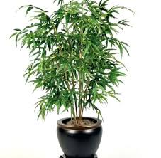 good low light plants best and easy to grow houseplants for low light homes indoor plants