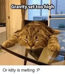 Melting Meme - gravitysattoo gravity set too high or kitty is melting p meme on