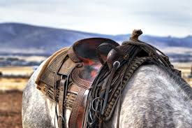 horse saddle brown and black leather horse saddle on white and gray animal