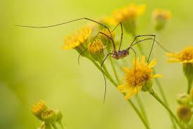 ameisen k che was hilft gegen ameisen im garten stunning was tun gegen ameisen