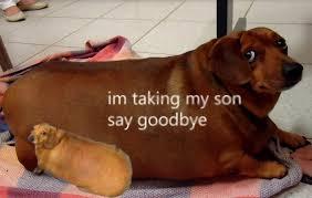 Don T Talk To Me Meme - don t talk to me or my son ever again