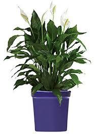 blue planters one day cobalt ceramic flower pots decorative round