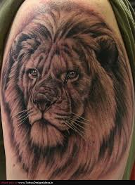 lion tattoo designs tattoo shop 36 free hd wallpapers images