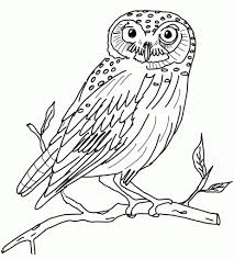 owl drawings for children cute owl coloring pages az coloring