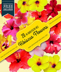 20 free high res hibiscus realistic flowers photoshop free brushes