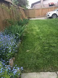 backyard basics how i u0027m freshening up my new backyard on my