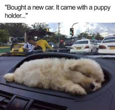 Baby Animal Memes - 876 best funny memes images on pinterest funny animal pics