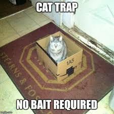 Cat Trap Meme - cat trap imgflip