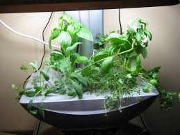 welcome to the jungle indoor gardening my aerogarden and