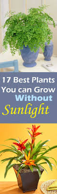 no sun plants plants that need no light home interiror and exteriro design