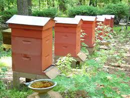 stylish beehive town u0026 country gardening