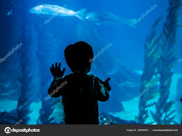 silhouette of a child who observes tropical marine fish in the