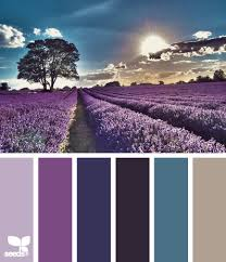 color lavender setting by design seeds lavender purple indigo
