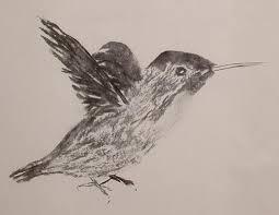charcoale hummingbird sketch by twinkletoes3395 on deviantart