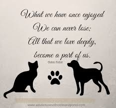 loss of pet what we once enjoyed quote by helen keller dogs