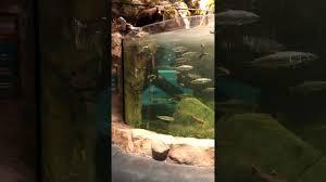 Bass Pro Shop Home Decor Bass Pro Shop Aquarium Tsawwassen Mills Mall Youtube