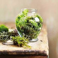 20 ideas for home decorating with glass plant terrariums unique