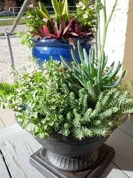 garden talk container gardening edison u0026 ford winter estates blog