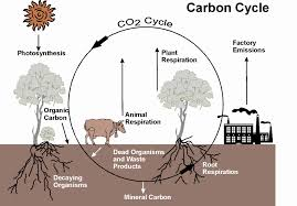 The Boring Carbon Cycle Resilience