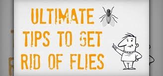 Getting Rid Of Flies In Backyard How To Get Rid Of House Flies Housekeeping Wonderhowto
