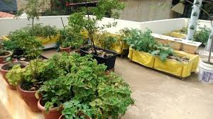 terrace gardening gardening at home 5 secrets to creating the most amazing terrace