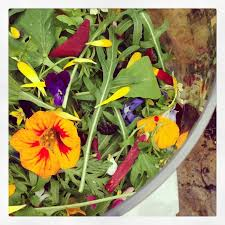 Salad With Edible Flowers - 72 best savoury dishes with edible flowers images on pinterest