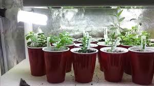 Grow Lights For Indoor Herb Garden - fresh indoor herb garden artificial light 8401