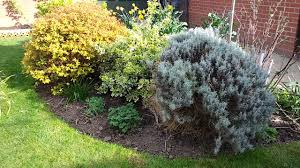 shrubs in the small garden the small garden channel youtube